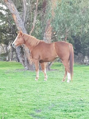 Horses For Sale (under $5000)